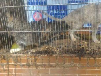 Após denúncia de ONG, PM resgata animais em situação de maus-tratos em Paulo Afonso