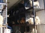 Nova lei obriga veterinários a informar a autoridades policiais indícios de maus-tratos a animais De acordo com a norma 16.064, publicada no Diário Oficial de Pernambuco, na quinta (15), a medida envolve profissionais que exercem atividades em hospitais,